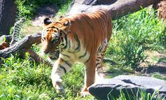 Groupon - Visit for Two or Four Adults or Children at Blank Park Zoo in DES MOINES (Des Moines). Groupon deal price: $6.00