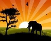 Africa Sunset - Silhouette of Elephant Standing in the Sunset and approaching three stock photography