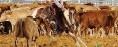 Willie Emillie cutting horse