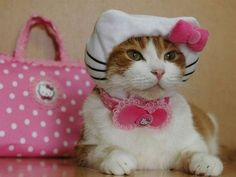 hello kitty kitty  waterfireviews.com