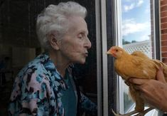 """""""Chickens provide new form of animal therapy for memory loss patients.""""  In picture: resident Sally Cross-Sevon was introduced to """"Clementine."""""""