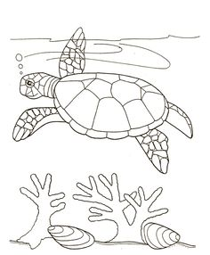 turtle swim near seaweed coloring page