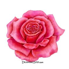 colored pencil drawings of flowers | Step 10: Finish red rose drawing