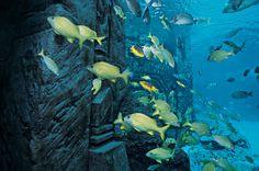 Ruins Lagoon at Atlantis, Paradise Island, Bahamas.