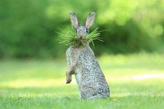 Najzabawniejsze zdjęcia finalistów The Comedy Wildlife Photography Awards 2017