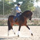 Dressage Training Exercises to Calm Your Hot Horse | EquiSearch | EquiSearch