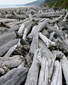 Climb over driftwood piles on Kalaloch Beach in WashingtonState