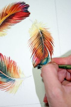 Three Feathers Rainbow feathers watercolor study by jodyvanB