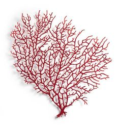 Red Coral (Corallium rebrum) 2016 Polyester thread and pins on paper by Meredith Woolnough. The work explores the sculptural possibilities of a unique embroidery technique that utilizes a domestic sewing machine and a base fabric that dissolves in water. Arte Coral, Coral Art, Fan Coral, Embroidery Art, Machine Embroidery, Sea Plants, Creative Textiles, Textile Artists, Fiber Art