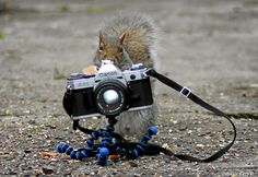 strike a pose for squirrels.
