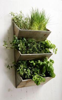 Shabby Chic Nagy Falra szerelhető Herb Planter Kit Seeds
