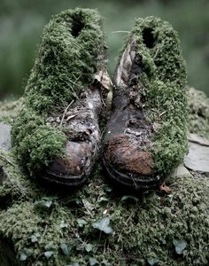 Abandoned walking boots reclaimed by nature