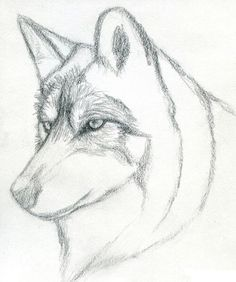 How To Draw A Wolf Head Mexican Step 3