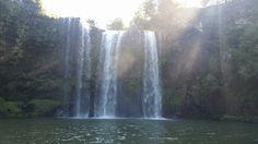 Whangrei falls nz