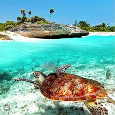 TODAY'S DAYDREAM: Cancun. What's yours? #love2cruise #days2cruisemas