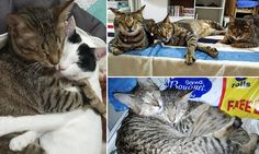 Woman adopts three BLIND cats left abandoned in a warehouse