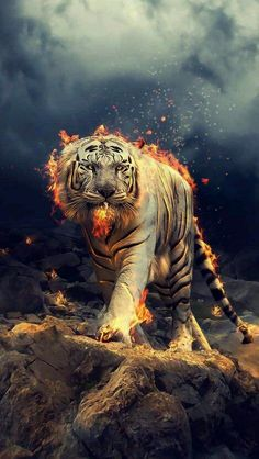 Angry, raging, white tiger, w allpaper Tier Wallpaper, Wolf Wallpaper, Galaxy Wallpaper, Mobile Wallpaper, Wallpaper Backgrounds, Wallpaper Samsung, Iphone Wallpapers, Wallpaper Size, Tiger Wallpaper Iphone