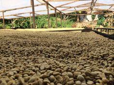 We're bringing you #farmtocup coffee: Costa Rica (West Valley Finca Don Ricardo)