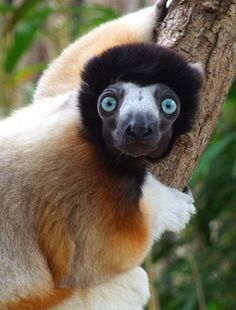 From lemurs to beaches: 12 reasons to visit Madagascar https://www.bradtguides.com/articles/best-things-to-do-see-madagascar/?destination=19