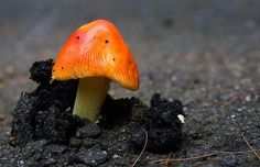 Post with 4075 votes and 131566 views. Tagged with nature, aww, plants, awesomeness, nature is awesome; Shared by ipostpets. plants that just won't give up Fleur Orange, Planting For Kids, Mushroom Art, Orange Mushroom, Urban Nature, Desert Plants, Faux Plants, Flower Quotes, Scenic Photography