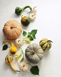 Pumpkins and Gords by Joseph De Leo