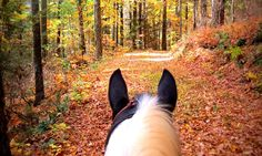 Horses Who Just Can't Get Enough Of Fall - COWGIRL Magazine
