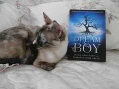 Books and cats! Bella and the book Dream Boy