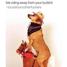Just in case you had a bad day, here's a dog in a hat on a rocking horse. Funny Dog Pictures, Animal Pictures, Cute Pictures, Funny Images, Funny Photos, Beautiful Pictures, Baby Animals, Funny Animals, Cute Animals