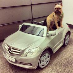 Man's best friend in man's best car. #MBPhotoCredit: @benzblogger Mercedes Benz #Instacar