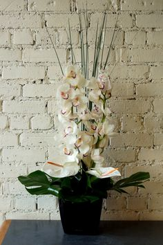 Some photos of a few all white flower arrangements for some corporate clients this week, with white cymbidium orchids, white anthurium, white veronica, white hydrangea and calla lilies. #reidsflorists #whiteflowers #corporateflowers