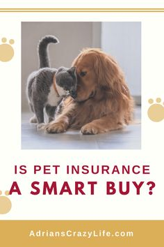 As the owner of a newly diabetic cat, I have great respect for pet insurance. It's not cheap for a healthy pet, so you'll have to weigh the benefits or the downside. Money Saving Meals, Best Money Saving Tips, Money Savers, Pet Plan, Debt Snowball, Smart Buy, Show Me The Money, Broken Leg, Pet Insurance