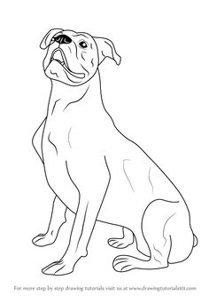 Boxer Energetic And Funny Boxer Pinterest Drawings Boxer