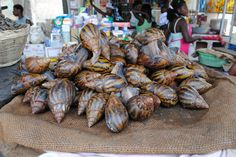 Commercial Snail Farming : - Breeding And Raising Giant African Snails (Achatina Achatina)