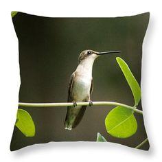 Humming Bird Break Throw Pillow: by Marcela Martinez $25 http://instaprints.com/products/humming-bird-break-marcela-martinez-throw-pillow-14-14.html