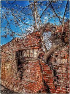 Brick and tree