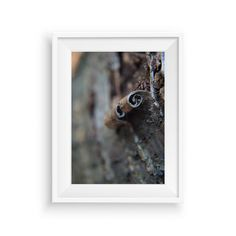 Pastel Brown Abstract photography,Abstract Wall Art Print,Minimalist Photography,Brown Cream Macro Photo,Country Home Decor,Macro curly bark by flyingbike on Etsy