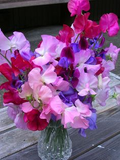 Sweet peas: I want in my garden