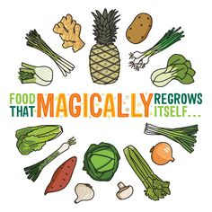 Food That Magically Regrows Itself from Kitchen Scraps...full infographic. I have attempted multiple times to regrow pineapples but have been unsuccessful. My mother has done it - takes about 2 years
