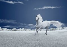 Stunning white horse in a field of grey. Photo by Caras Ionut from Romania