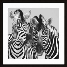 Namibia Zebras by Nina Papiorek    http://www.artsperfect.com/products/art01595/Namibia-Zebras    Framed and Matted Art - $166.40