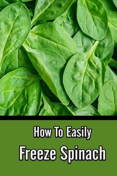 How To Easily Freeze Spinach – A Great Way To Preserve Fresh Spinach Fresh Spinach Recipes, Cook Fresh Spinach, Vegetable Recipes, How To Harvest Spinach, How To Store Spinach, Freezing Vegetables, Freezing Fruit, Frozen Vegetables, Freezing Cold