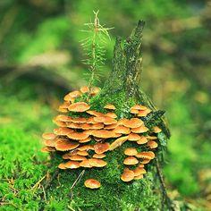 mushroomtower by indojo.deviantart.com on @deviantART