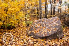 Fall Colors, Petrifying Springs Park, Kenosha County, WI USA