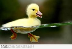 Happy duckling is happy.