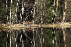 birch reflections Finland, Birch, National Parks, Tours, Nature, Travel, Naturaleza, Viajes, Trips