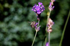Photo of wasp in garden.