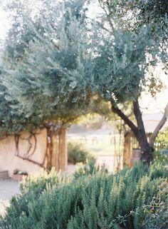 sunstone winery wedding | jen huang photo | olive and rosemary