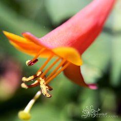 Macro photography/Gervasi Photography