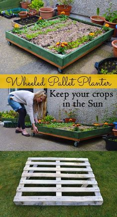 .How to make a Wheeled Pallet Planter - it allows you to pull your plants around flat spaces and both into and out of the sun. Great for small patios and gardens!