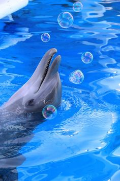 Play with bubbles          #dolphins